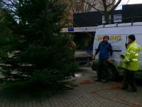 Weihnachtsbaum, 001